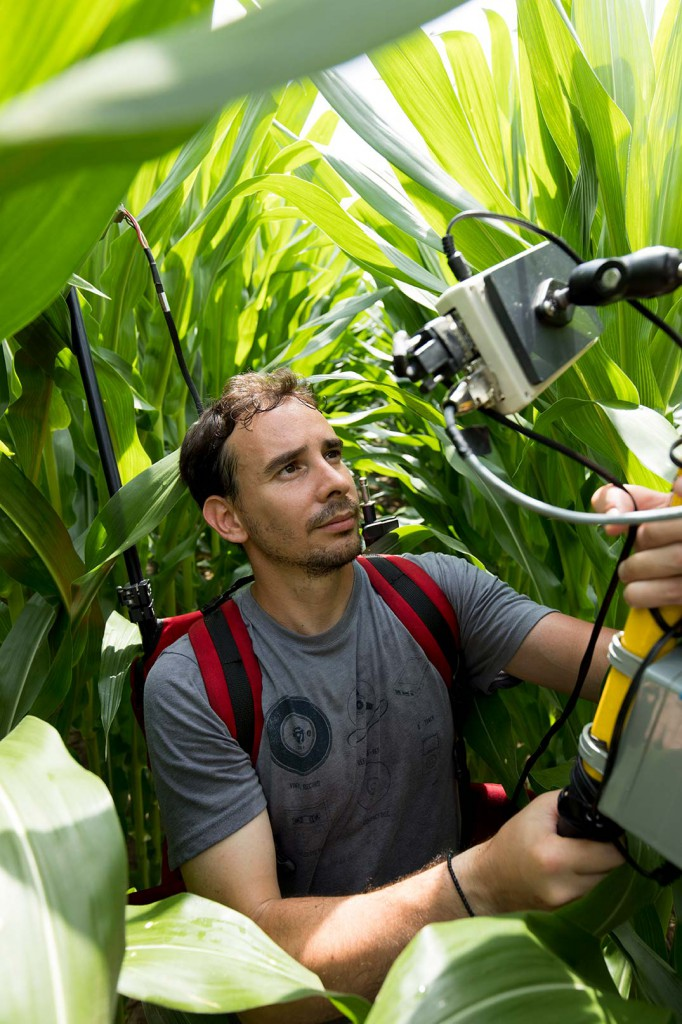 Graduate student uses an optical reflectance sensor to measure the biomass and vigor of corn plots in a Tifton Campus research field