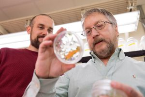 Postdoctoral researcher Ed McAssey and professor Wayne Parrott look at soybean cultures and talk about gene discovery inside the culture room of Parrott's laboratory